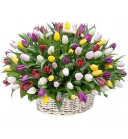 Корзина из 101 тюльпана